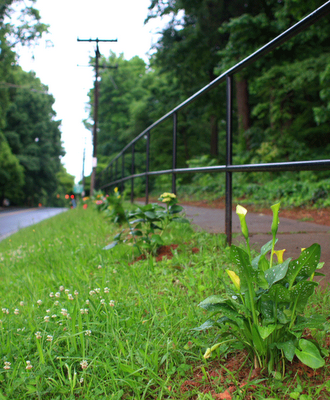 Photo by Dave Potts. Guerrilla Gardeners recently tackled the 2700 block of Commonwealth Avenue