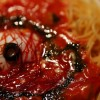 Nasty looking eye pasta photo by: chikache http://www.flickr.com/photos/chikache/